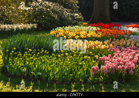 Flower bed with tulips, hyacinth and daffodils under trees in spring garden - Stock Photo