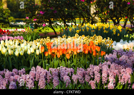 Garden with tulips, hyacinths and daffodils in spring - Stock Photo