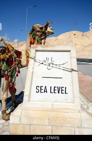 Camel hitched to a sign indicating sea level near the Dead Sea in Israel - Stock Photo