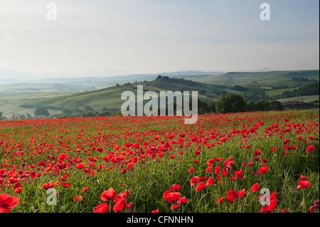 Spring in Tuscany, Italy - Stock Photo