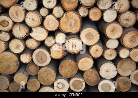 Stacked Wooden logs - Stock Photo