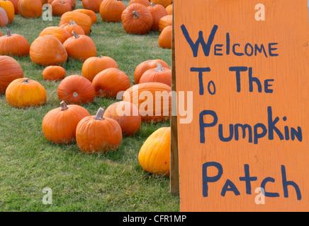 Halloween Pumpkin Patch with a variety of pumpkins - Stock Photo