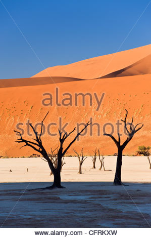 Dead Vlei, Namib-Naukluft Park, Namibia - Stock Photo
