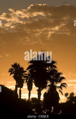 Aug. 29, 2012 - Ventura, Ca, USA - August 28, 2012 Ventura, Ca. USA. Palm trees are silhouetted by the morning sunrise - Stock Photo