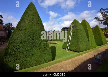Athelhampton, Dorset, UK. 8th October 2012. Patrick Cooke spends nearly two weeks of every year up a ladder trimming - Stock Photo