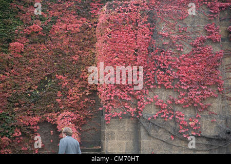London, UK. 19th October 2012.  A man walks past Autumn display of colors on Horse Guards Parade in London. Credit: - Stock Photo