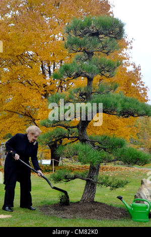 Former American Secretary of State with Czech origin Madelaine Albright plants Japanese Black Pine in Prague Botanical - Stock Photo