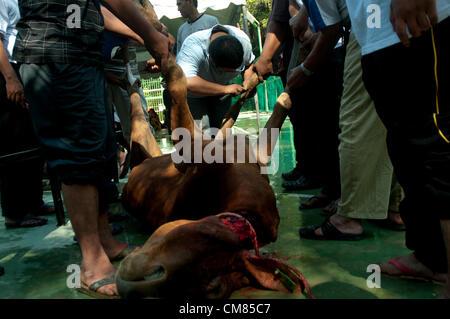 Malaysian muslim pilgrim slaughter an animal as sacrifice during Eid al-Adha Feast of Sacrifice in Selangor, outside - Stock Photo