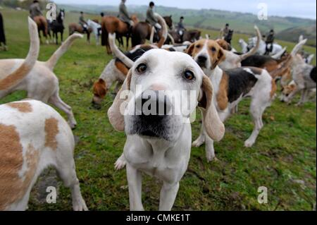 Ashkirk, Scotland, UK. - 02 Nov 2013 :  The Duke of Buccleuch's Foxhounds meet at Dimpleknowe near to Ashkirk in - Stock Photo