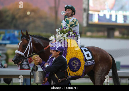 Arcadia, CA, USA. 2nd Nov, 2013. Mucho Macho Man with Gary Stevens aboard wins the Breeder's Cup Classic at Santa - Stock Photo