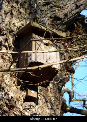 Small birds house made of wood and hanged on a trunk by winter beautiful day - Stock Photo
