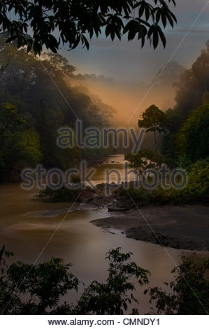 Dawn/sunrise over the Segama River, with mist hanging over lowland Dipterocarp rainforest. Heart of Danum Valley, - Stock Photo