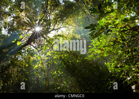 Early morning sun creating sunbeams through the humid rainforest canopy, Andasibe-Mantadia National Park, Madagascar. - Stock Photo