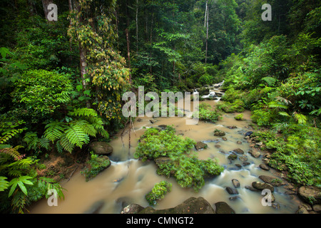 River flowing through lush rainforest, Maliau Basin, Sabah, Borneo, Malaysia. - Stock Photo