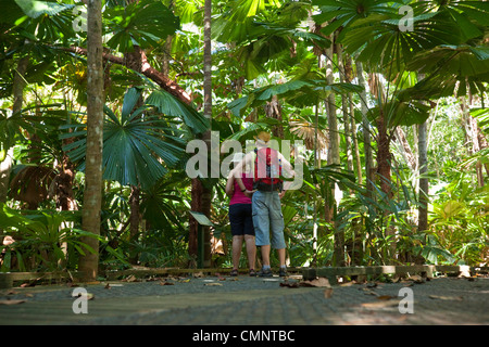 Hikers walk through a licuala palm forest on the Dubuji Boardwalk.  Daintree National Park, Queensland, Australia - Stock Photo