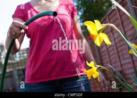 Woman watering flowers in back garden ahead of the national hosepipe ban which could be implemented due to dry weather - Stock Photo