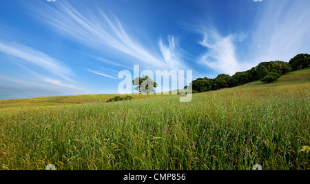 Beautiful sky, lone tree, and green field in central California in summer - Stock Photo