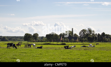 Dutch polder landscape with farms, horses and cows on sunny summer afternoon
