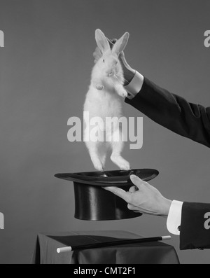 1960s MAGICIAN'S HANDS PULLING WHITE RABBIT OUT OF TOP HAT - Stock Photo