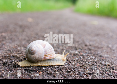Close-up of snail on street - Stock Photo