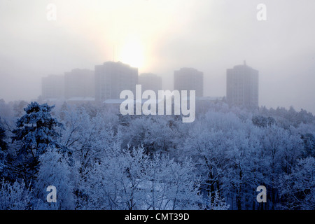 Trees covered by snow against buildings - Stock Photo