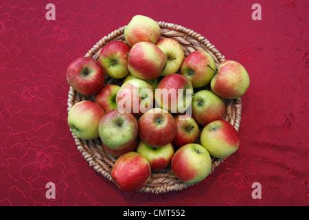 foodstuffs, fruit, pipfruit, apples in a basket, Malus domestica, Berlepsch - Stock Photo