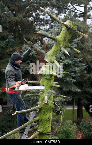 nature, landscape preservation, occupation, gardener stands on a ladder felling a diseased tree using a chainsaw, - Stock Photo