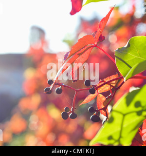 Close-up on autumn leaves - Stock Photo