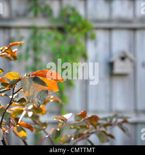 Close-up of leaves with birdhouse in the background - Stock Photo