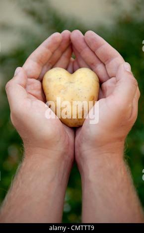 Close-up of human hand holding potato - Stock Photo