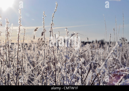 Close-up of frosty grass - Stock Photo