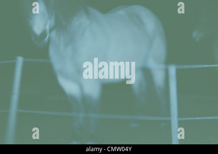 Horse stands beside barbed wire fence in paddock - Stock Photo