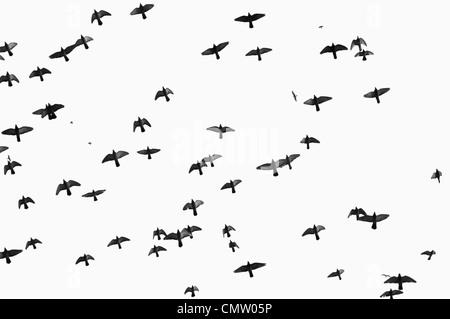 Birds flying against the sky - Stock Photo