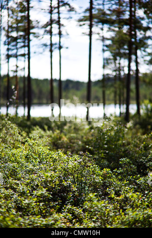 Forest glade in front of lake - Stock Photo