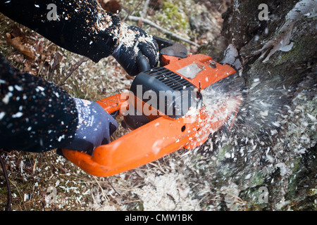 Person with chainsaw cutting tree trunk - Stock Photo