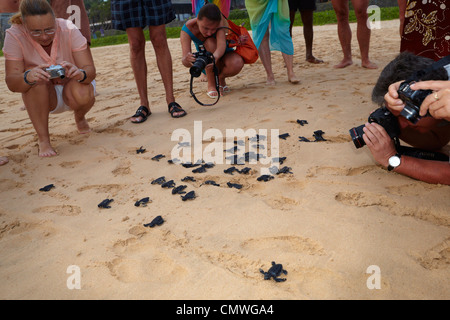 Sri Lanka - Koggala beach, village near Galle, young turtles hatchery realised into the ocean - Stock Photo