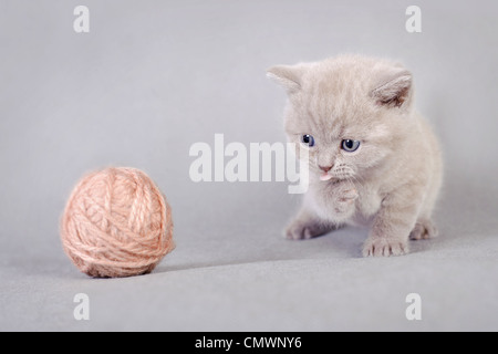 British shorthair kitten with ball of wool - Stock Photo