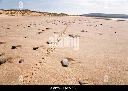 Single mountain bike tyre track along a remote beach in Wales - Stock Photo