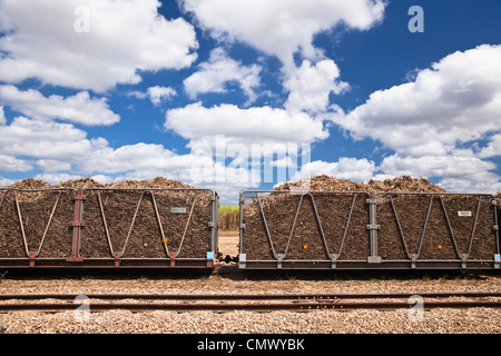 Harvested sugar cane loaded in bins ready to be transported to the sugar mill. Cairns, Queensland, Australia - Stock Photo