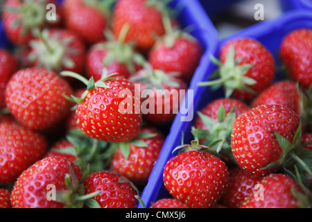 Germany, Bremen, Strawberries in tray at market, close up - Stock Photo