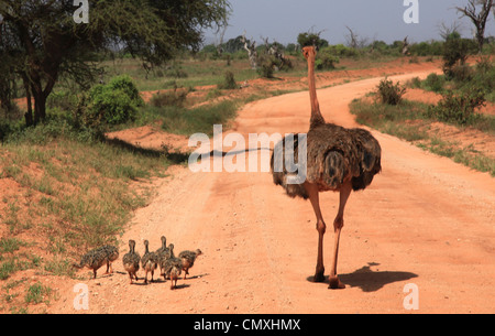 Tsavo East National Park, Kenya, Africa - Stock Photo
