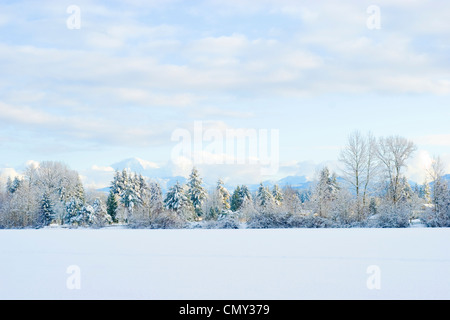 Snow covered trees line Mill Lake in Abbotsford, BC, Canada. - Stock Photo