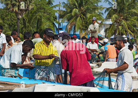 Fishermen with fish in nets on this popular surf beach - badly hit by the 2004 tsunami; Arugam Bay, Eastern Province, - Stock Photo
