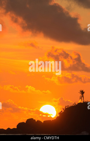 Sunset and palm tree on the western point of the south coast surf beach at Mirissa, near Matara, Southern Province, - Stock Photo