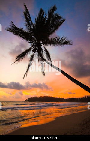 Sunset and palm tree and the western point of the south coast surf beach at Mirissa, near Matara, Southern Province, - Stock Photo