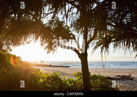 View through pandanus palms at Four Mile Beach at dawn. Port Douglas, Queensland, Australia - Stock Photo