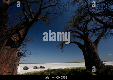 4X4 explorers park up by Baines baobabs in Nxai Pan National Park, Botswana. - Stock Photo