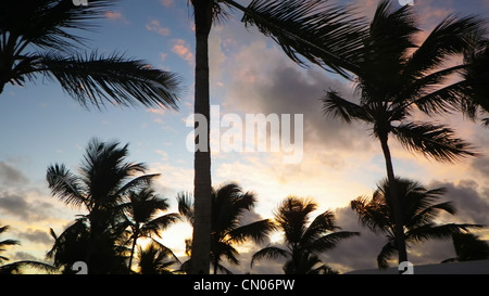Palms silhoette on the beautiful evening sunset sky - Stock Photo