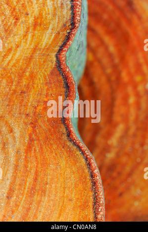 Tree rings. Sawn tree trunk pattern. - Stock Photo