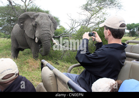 An elephant looks at the camera whilst a tourist takes a photograph of him. Lions Sands, Kruger NP, South Africa. - Stock Photo
